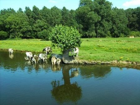 De Vlaamse Waterweg foto De Willemsroute